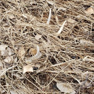Best Shed Hunting Tips