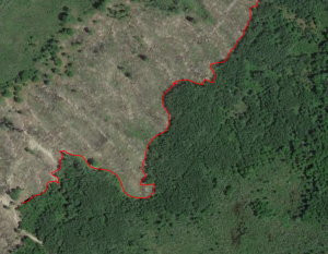 Deer Hunting Transition Lines