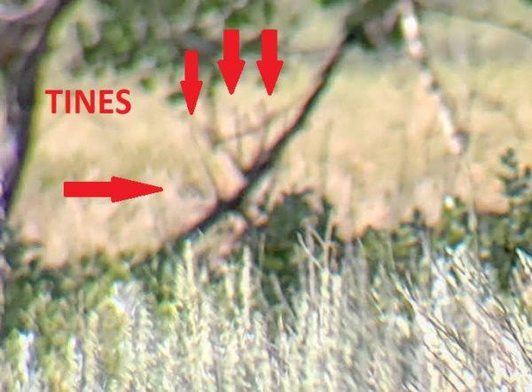 Spot and Stalk Mule Deer Hunting
