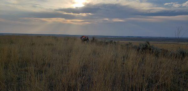 antelope hunting eastern montana