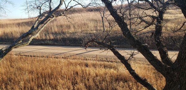 Overlooked Treestand Locations