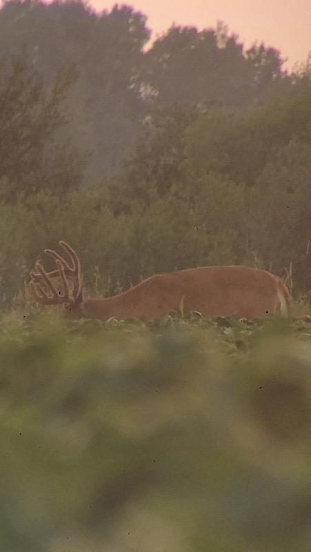 early season deer scouting tips
